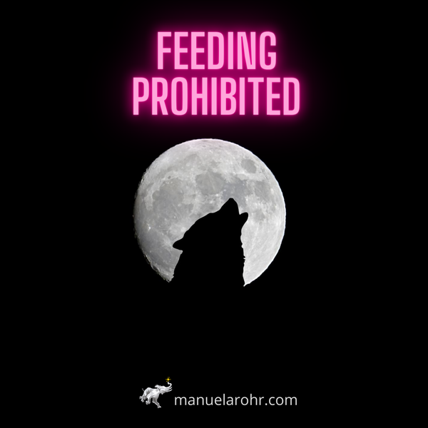 Feeding Prohibited 🐺 Wednesday Whisper 32/20